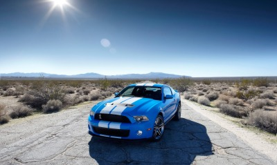 Blue Shelby