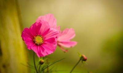 цветок макро фон