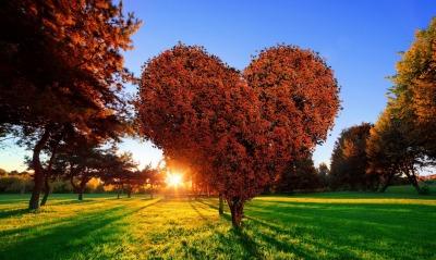 дерево сердце солнце лучи