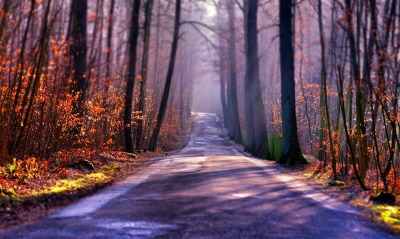 природа деревья лес дорога nature trees forest road