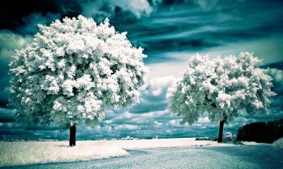 природа деревья цветы белый