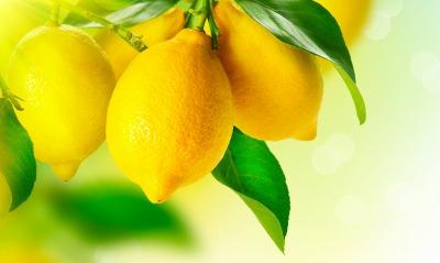 лимоны цитрусовые ветка