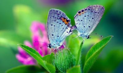 бабочки макро цветы